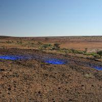 Burato azul en Tifariti
