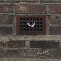 The tenant. London. UK. 2010, de  Isaac Cordal