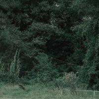Still Life Nº III. Net & Woods II